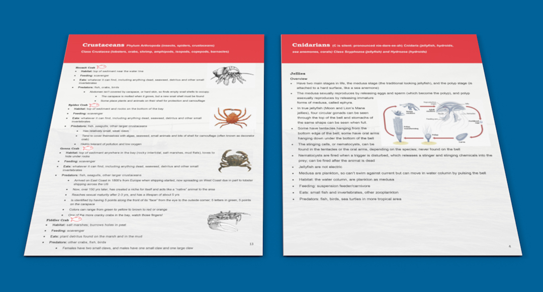 Graphic Design Print assets created for Save The Bay in Rhode Island. This image contains critter guide internal pages.